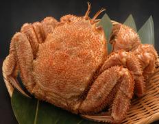 虎杖浜の毛蟹