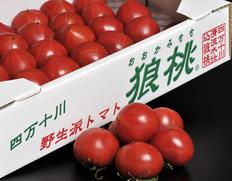 いよいよ食べ納め!究極のトマト「狼桃」