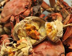 濃厚な味と香りで多くの食通を唸らせてきた「モクズガニ」