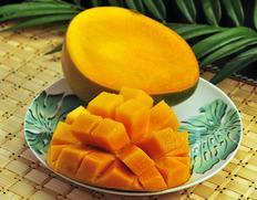 超特大1.2kg級!土佐清水の自然が育てた「りぐっちょキーツマンゴー」