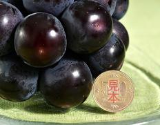 『藤稔』山梨県勝沼産 4Lサイズ 約650g×2房