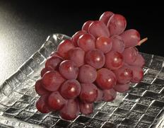 種なしで皮ごと食べられる赤系ぶどうの最新品種「サニードルチェ」