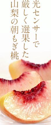 山梨産「春日居の桃」特秀品