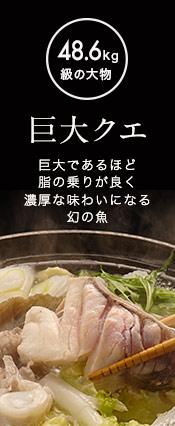 長崎県産「巨大クエ」