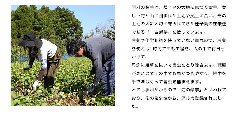 原料の紫芋は、種子島の大地に息づく紫芋。美しい海と山に囲まれた土地や風土に合い、その土地の人に大切に守られてきた種子島の在来種である「一吉紫芋」を使っています。                                   農薬や化学肥料を使っていない畑なので、農薬を使えば1時間ですむ工程を、人の手で何日もかけて、                                   丹念に雑草を抜いて害虫をとり除きます。糖度が高いので土の中でも虫がつきやすく、地中を手でほじくって害虫を捕まえます。                                   とても手がかかるので「幻の紫芋」といわれており、その希少性から、アルカ登録されました。