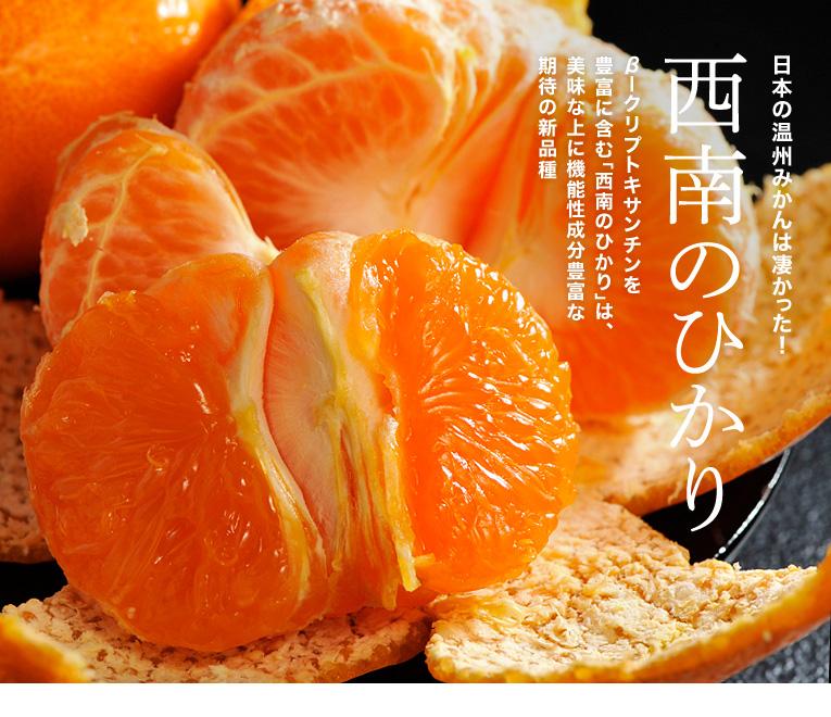 「西南のひかり」日本の温州みかんは凄かった!β―クリプトキサンチンを豊富に含む、「西南のひかり」は、美味な上に機能性成分豊富な期待の新品種
