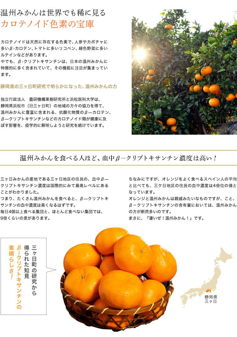 温州みかんは世界でも稀に見る、カロテノイド色素の宝庫 カロテノイドは天然に存在する色素で、人参やカボチャに多いβ-カロテン、トマトに多いリコペン、緑色野菜に多いルテインなどがあります。 中でも、β-クリプトキサンチンは、日本の温州みかんに特徴的に多く含まれていて、その機能に注目が集まっています。  静岡県の三ヶ日町研究で明らかになった、温州みかんの力 独立行政法人 農研機構果樹研究所と浜松医科大学は、静岡県浜松市(旧三ヶ日町)の地域の方々の協力を得て、温州みかんに豊富に含まれる、抗酸化物質のβ―カロテン、β―クリプトキサンチンなどのカロテノイド類が健康に及ぼす影響を、疫学的に解明しようと研究を続けています。  温州みかんを食べる人ほど、血中β―クリプトキサンチン濃度は高い! 三ヶ日みかんの産地である三ヶ日地区の住民の、血中β―クリプトキサンチン濃度は国際的にみて最高レベルにあることがわかりました。 つまり、たくさん温州みかんを食べると、β―クリプトキサンチンの血中濃度は高くなるはずです。 毎日4個以上食べる集団と、ほとんど食べない集団では、9倍くらいの差があります。  ちなみにですが、オレンジをよく食べるスペイン人の平均と比べても、三ケ日地区の住民の血中濃度は4倍位の値となっています。オレンジと温州みかんは親戚みたいなものですが、こと、β-クリプトキサンチンの含有量においては、温州みかんの方が断然多いのです。 まさに、『凄いぜ!温州みかん!』です。  三ヶ日町の研究から得られた知見 β―クリプトキサンチンの素晴らしさ!