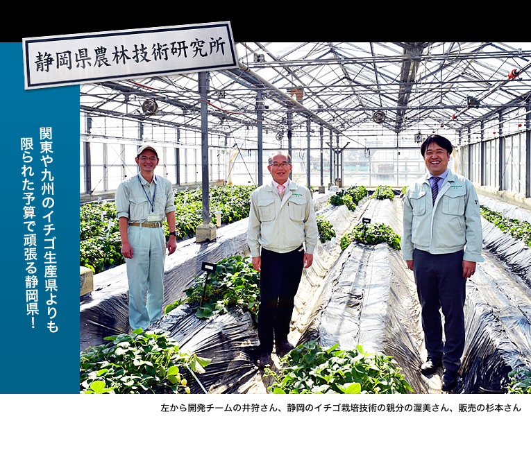 関東や九州のイチゴ生産県よりも限られた予算で頑張る静岡県!左から開発チームの井狩さん、静岡のイチゴ栽培技術の親分の渥美さん、販売の杉本さん