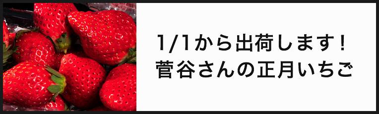 菅谷さんの正月いちご