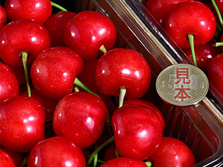 山形県 東根市・jondaフルーツの極実(きわみ) の商品画像