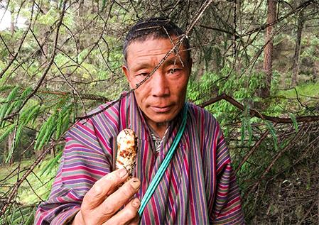 人気急上昇中のブータン産松茸。カナダ産・北米産等の松茸とは異なり、国産松茸とよく似た見た目です