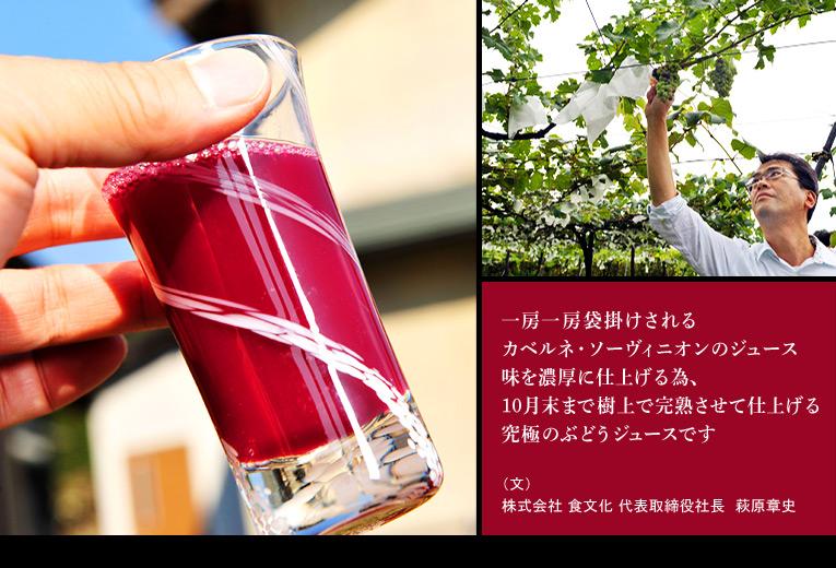 一房一房袋掛けされるカベルネ・ソーヴィニオンのジュース 味を濃厚に仕上げる為、10月末まで樹上で完熟させて仕上げる究極のぶどうジュースです (文)株式会社 食文化 代表取締役社長 萩原章史