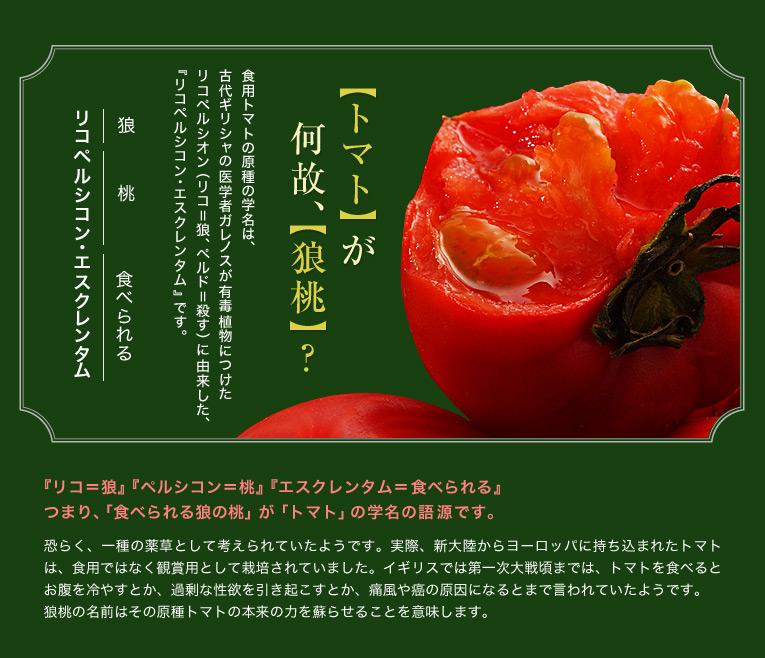 トマトが何故、狼桃? 食用トマトの原種の学名は古代ギリシャの医学者ガレノスが有毒植物につけた、リコペルシオン(リコ=狼・ペルド=殺す)に由来した、リコペルシコン・エスクレンタムです。『リコ=狼』『ペルシコン=桃』『エスクレンタム=食べられる』つまり、食べられる狼の桃がトマトの学名の語源です。恐らく、一種の薬草として考えられていたようです。実際、新大陸からヨーロッパに持ち込まれたトマトは、食用ではなく観賞用として栽培されていました。イギリスでは第一次大戦頃までは、トマトを食べるとお腹を冷やすとか、過剰な性欲を引き起こすとか、痛風や癌の原因になるとまで言われていたようです。 狼桃の名前はその原種トマトの本来の力を蘇らせることを意味します。