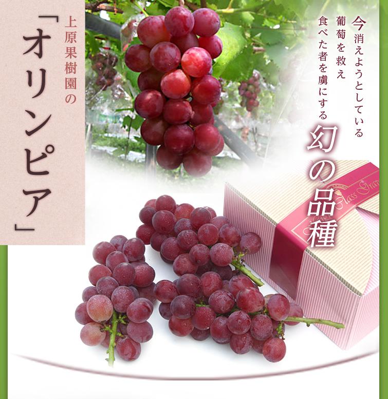 今消えようとしている葡萄を救え 食べた者を虜にする幻の品種 上原果樹園の「オリンピア」