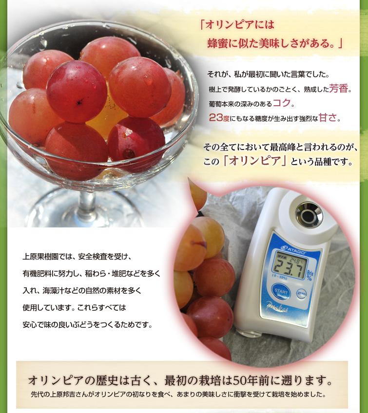 「オリンピアには蜂蜜に似た美味しさがある。」 それが、私が最初に聞いた言葉でした。  樹上で発酵しているかのごとく、熟成した芳香。 葡萄本来の深みのあるコク。 23度にもなる糖度が生み出す強烈な甘さ。  その全てにおいて最高峰と言われるのが、 この「オリンピア」という品種です。   上原果樹園では、安全検査を受け、有機肥料に努力し、 稲わら・堆肥などを多く入れ、海藻汁などの自然の素材を多く使用しています。 これらすべては安心で味の良いぶどうをつくるためです。   オリンピアの歴史は古く、 最初の栽培は50年前に遡ります。  先代の上原邦吉さんがオリンピアの初なりを食べ、 あまりの美味しさに衝撃を受けて栽培を始めました。