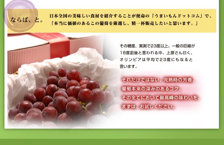 ならば、と。  日本全国の美味しい食材を紹介することが使命の「うまいもんドットコム」で、 「本当に価値のあるこの葡萄を厳選し、精一杯販売したいと思います。」  今回は、シーズン終了間近という事もあり、 特選オリンピアよりも安価な、ご家庭用規格のみの販売です。  色目が少し薄く、房に多少バラつきがあるだけで、 ご自宅で食べる分には、全く申し分ありません。  その糖度、実測で23度以上。 一般の巨峰が18度前後と言われる中、 上原さん曰く、オリンピアは平均で23度にもなると言います。  それだけではない、完熟時の芳香、葡萄本来の深みのあるコク。 その全てにおいて最高峰の味わいを、まずは、お試しください。