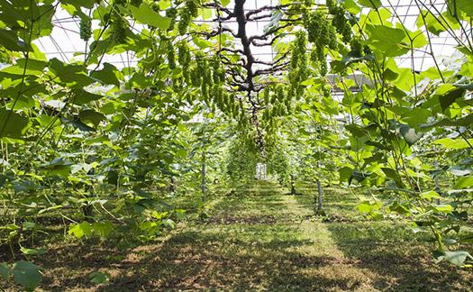 数年かけて観光農園にしたい木村幸司さん。宮崎県にある「きむら農園」にはライチやブルーベリーも植えています