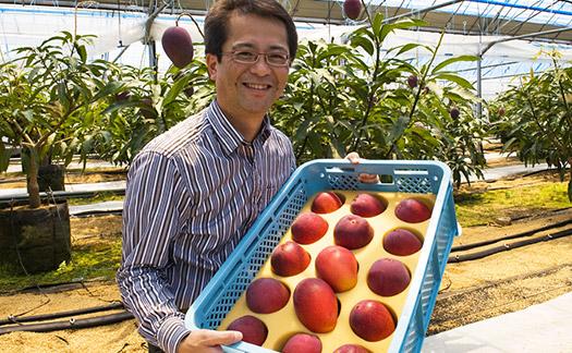 収穫したての宮崎完熟マンゴー「時の雫」を持つ㈱食文化 萩原章史。木村さんの宮崎完熟マンゴーはほとんどが「太陽のタマゴ」級の圧巻の品質を誇ります!