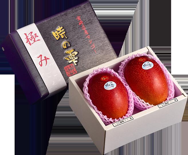 宮崎完熟マンゴー「時の雫」を化粧箱に入れてお届けします。母の日ギフトやご贈答にも最適です