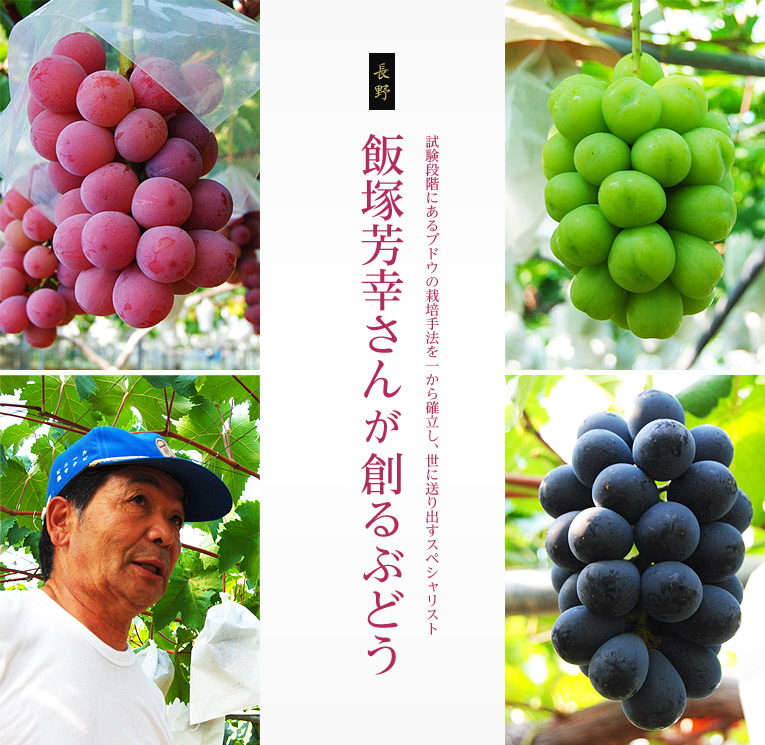 試験段階にあるブドウの栽培手法を一から確立し、世に送り出すスペシャリスト、飯塚芳幸さんが創るぶどう