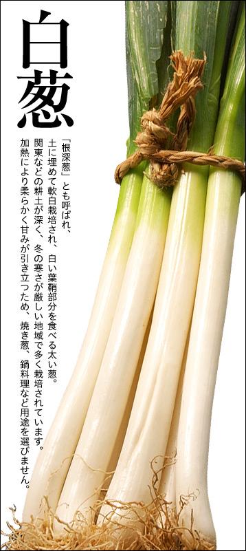 【白葱】「根深葱」とも呼ばれ、土に埋めて軟白栽培され、白い葉鞘部分を食べる太い葱。関東などの耕土が深く、冬の寒さが厳しい地域で多く栽培されています。加熱により柔らかく甘みが引き立つため、焼き葱、鍋料理など用途を選びません。