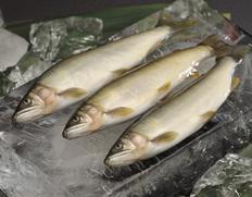 天然鮎 食べ比べ