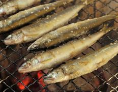 琵琶湖産 姉川の天然鮎  約1kg(目安として40〜60匹ほど)※冷凍