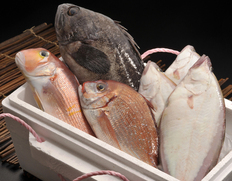 若狭湾『季節の鮮魚詰め合わせセット』(鱗・内臓処理済み)※冷蔵