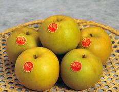 兄弟果で見た目も味も違う!鳥取県生まれの高糖度梨「新甘泉」&「なつひめ」