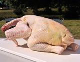 村越さんの『青森シャモロック』 一羽中抜き(2.1〜2.4kg)内臓付 ※冷蔵の商品画像