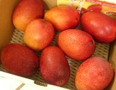 見た目が悪いものも混じりますが、沖縄ミニマンゴーが入荷!不完全な受粉で生まれた小玉でも美味なマンゴー