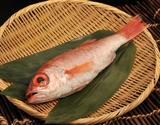 『のどくろ 鮮魚 (超特大)』600〜690g 1尾 日本海山陰西部産 ※冷蔵の商品画像