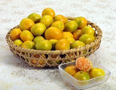 宮崎の山中で栽培される驚異的な味の極早生みかん「南国の陽蜜」