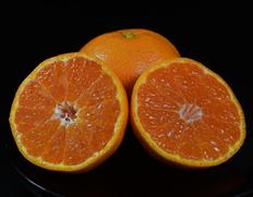 糖度12.5度選果「山北の甘みかん」は特秀品相当の逸品。贈答にも!