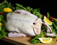 フレンチ鴨の父 桑原シェフ 青森ジャパンフォアグラ社が育てるバルバリー種の鴨
