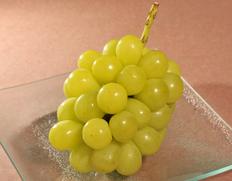 長野 飯塚さんの葡萄