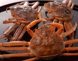 『活けセコ蟹(こっぺ)』1杯 250g級 丹後半島沖産  ※冷蔵の商品画像