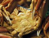 『訳あり・茹で松葉ガニ(ズワイガニ)』大サイズ 1杯 活けで1000g級 丹後半島沖産 ※冷蔵の商品画像