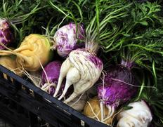 史上初!葉付きの生マカ ベジマカ(日本産マカ)ペルーからの輸入では叶わなかった野菜としてのマカです