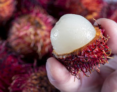 超希少な南国果実「生 ランブータン」が手に入るのは今だけ【数量限定】