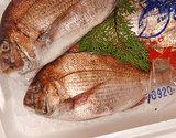 『天然真鯛』1尾(500g前後)宮城県産 ※冷蔵【豊洲市場直送】の商品画像