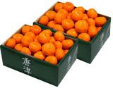 JAからつ『小玉みかん』 佐賀県産 2S〜3Sサイズ 約1.2キロ×2箱 化粧箱 ※常温の商品画像