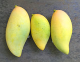 フルーツファーム山川の『希少品種マンゴー』約1kg(2〜3品種)鹿児島県産の商品画像