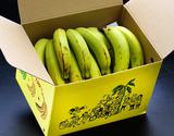 アララガマ農園『三尺バナナ(サンサンバナナ)』約1kg(7〜15本)沖縄県産 ※常温の商品画像