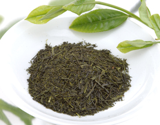 牧之原台地の新茶は本日から初摘み開始!